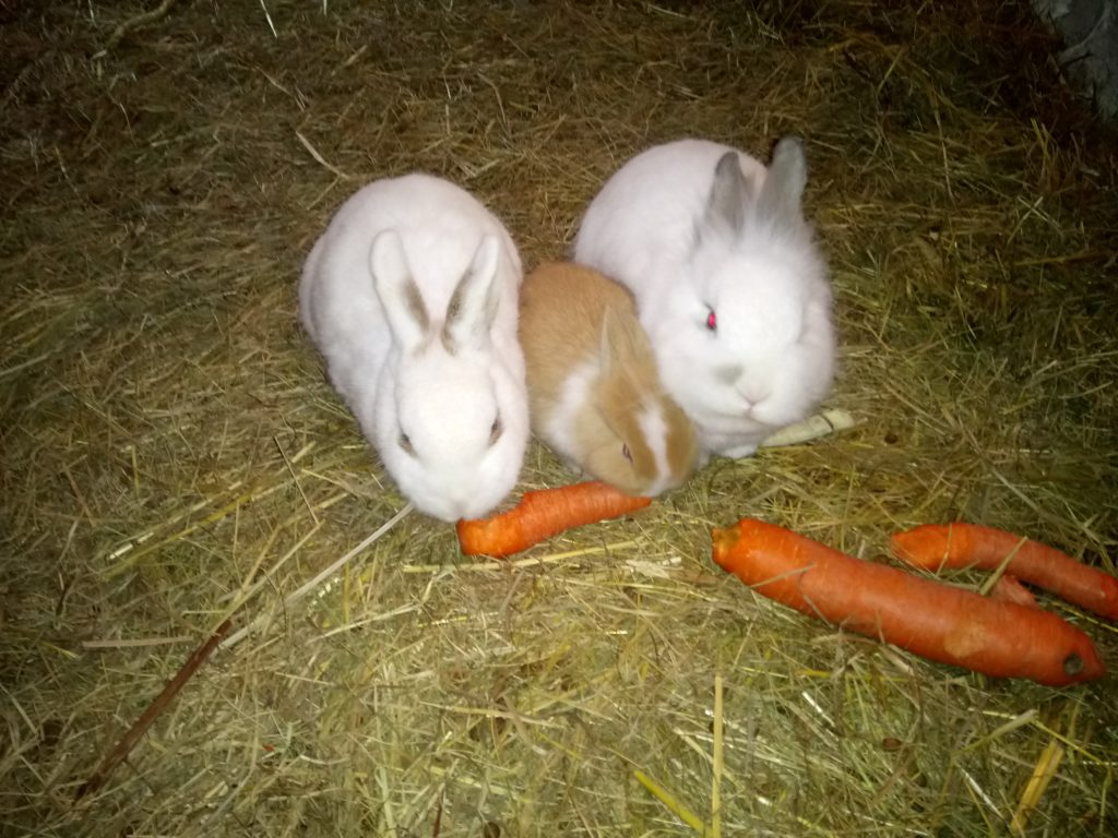 Kleine Kaninchenfamilie beim Frühstück